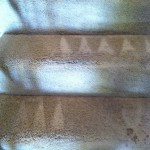 Sunnyvale-Stairs-Carpet-Cleaning
